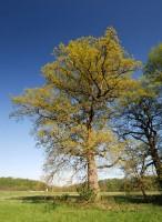 U loveckého pavilonu rostou mohutné stromy