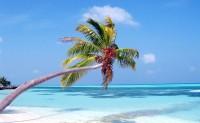 Štíhlé palmy na Maledivách se sklánějí nad vodami Indického oceánu