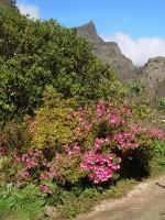 Kvetoucí ostrov Madeira