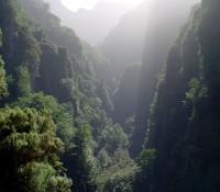 Bujný prales v madeirských horách působí trochu tajemně