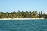 Dominikanska rep (Autor: srr)
