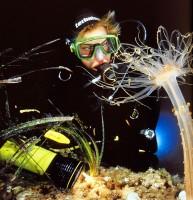 Potápěč si prohlíží sanaku rodu Alicia mirabilis na ostrově Korčula